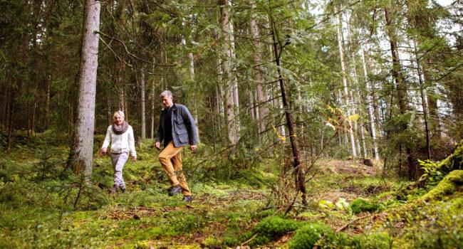 Wandern durch Wald - Kitzbühel