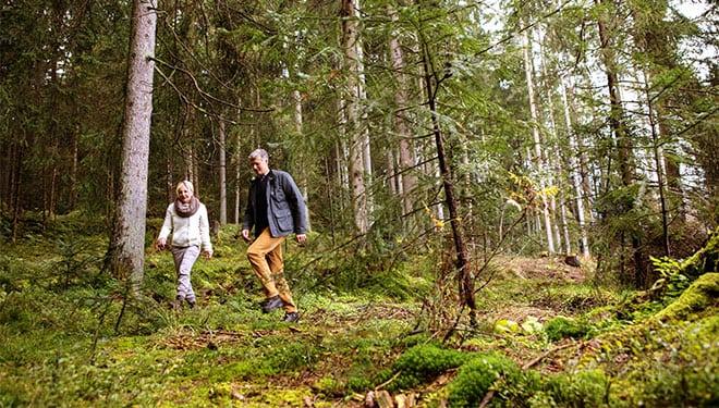 Kitzbühel Wandern im Wald